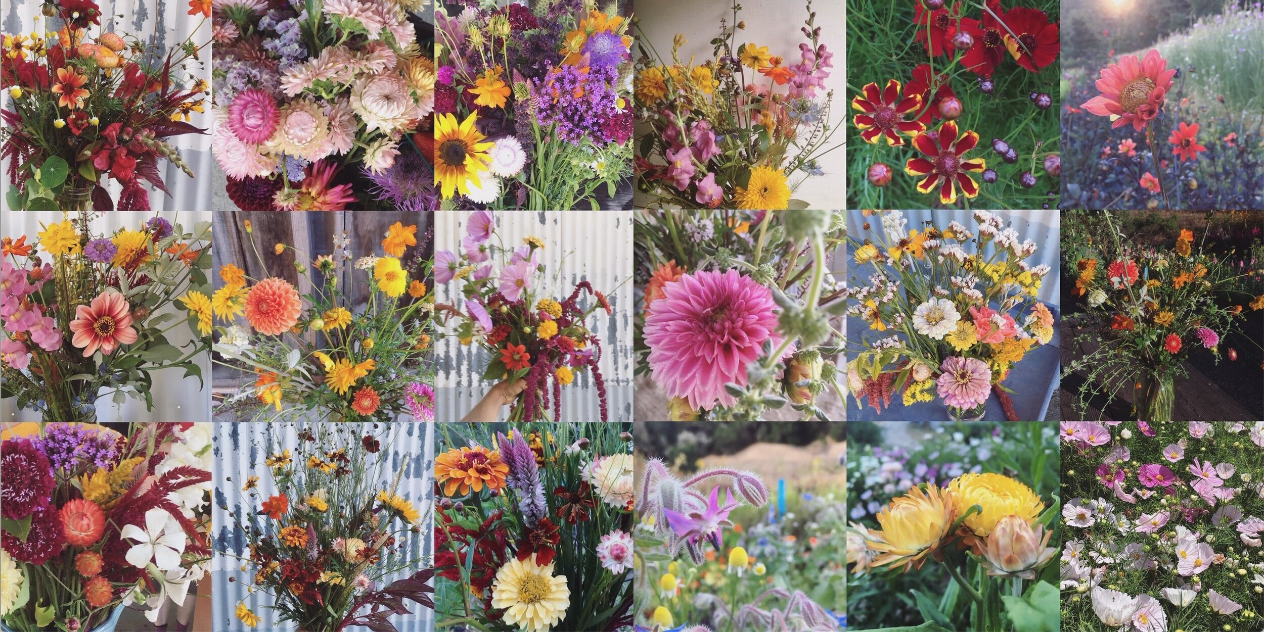 Looking back on a fabulous summer of flowers!