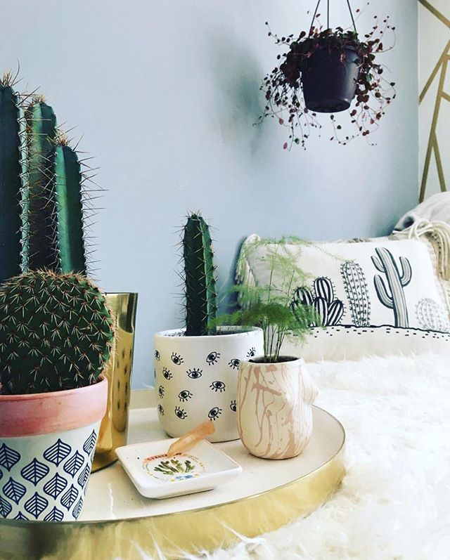 The cacti are loving this sunshine today, and we're loving @rinnie_doo's set up! #lpchome • • Open until 6! 🌵☀️