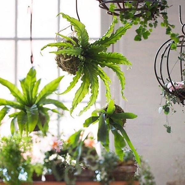 Second Chance Workshop - Another chance to create your own terrarium or kokedama
