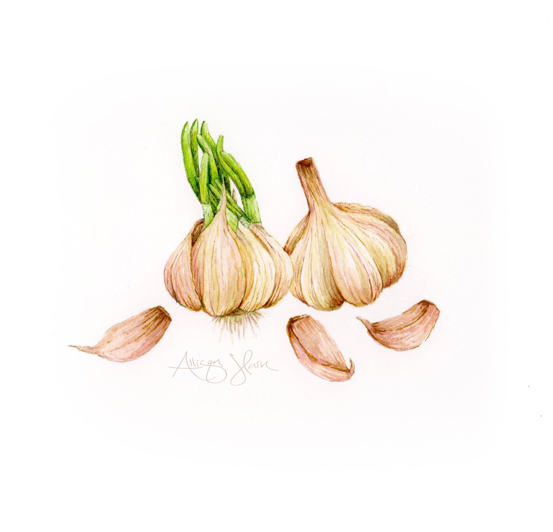 garlic.jpg