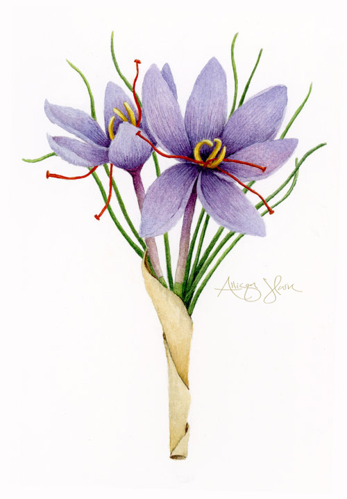 saffron.jpg