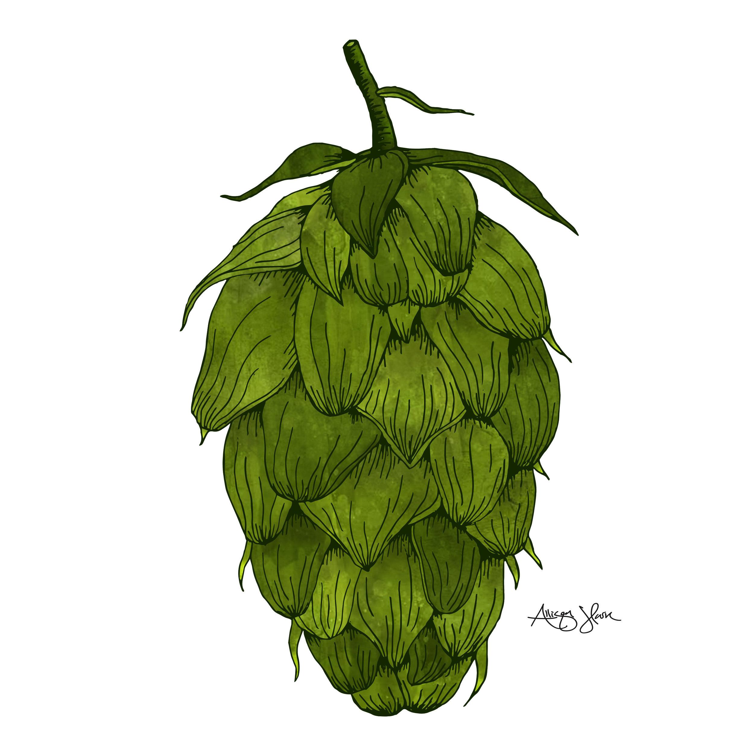 hops4.jpg