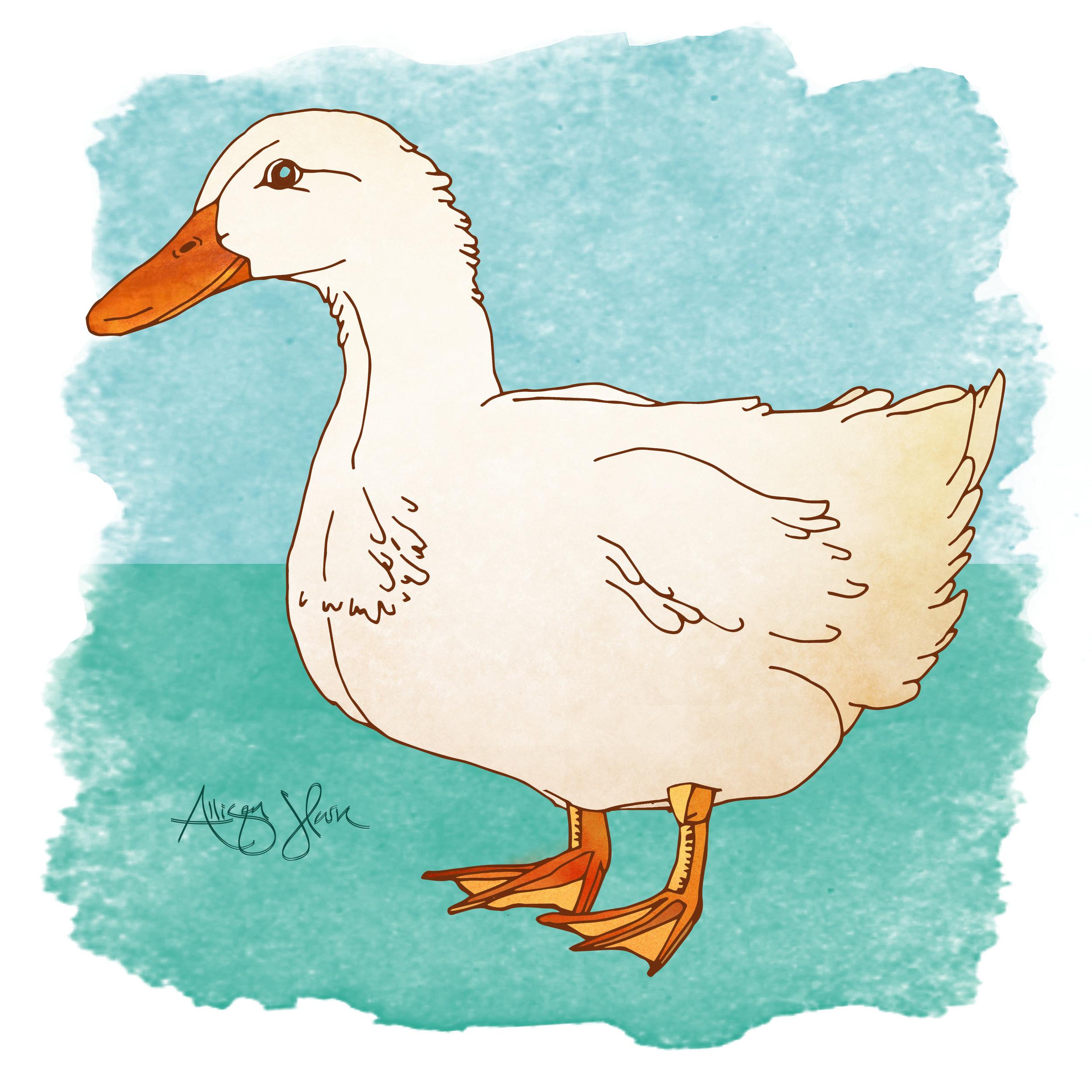 duck3.jpg