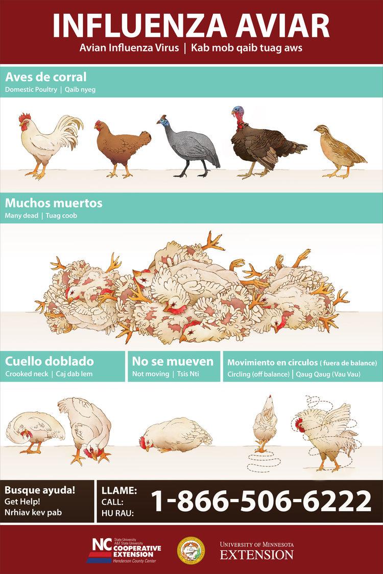Avian_Flu_USETHIS.jpg