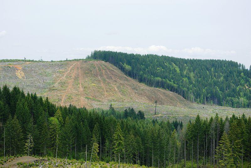 Logging Area in Northen Oregon Coast Range