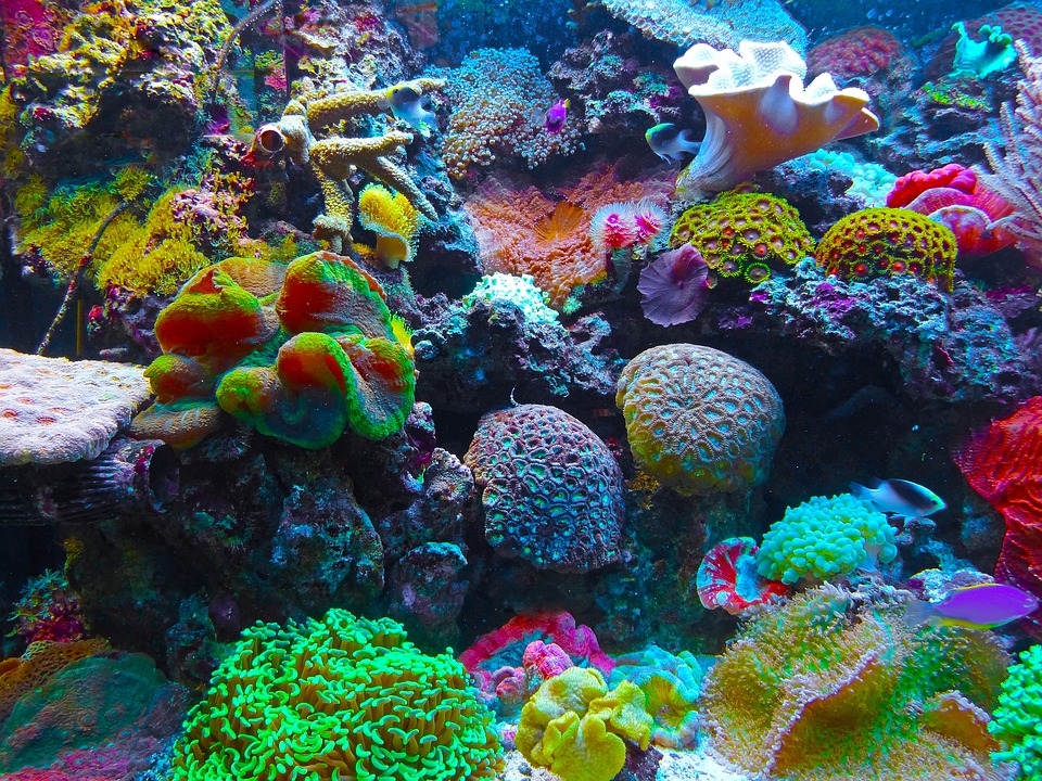 Coral Reef by Jan-Mallander