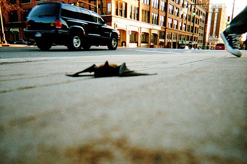 Injured Bat on Road