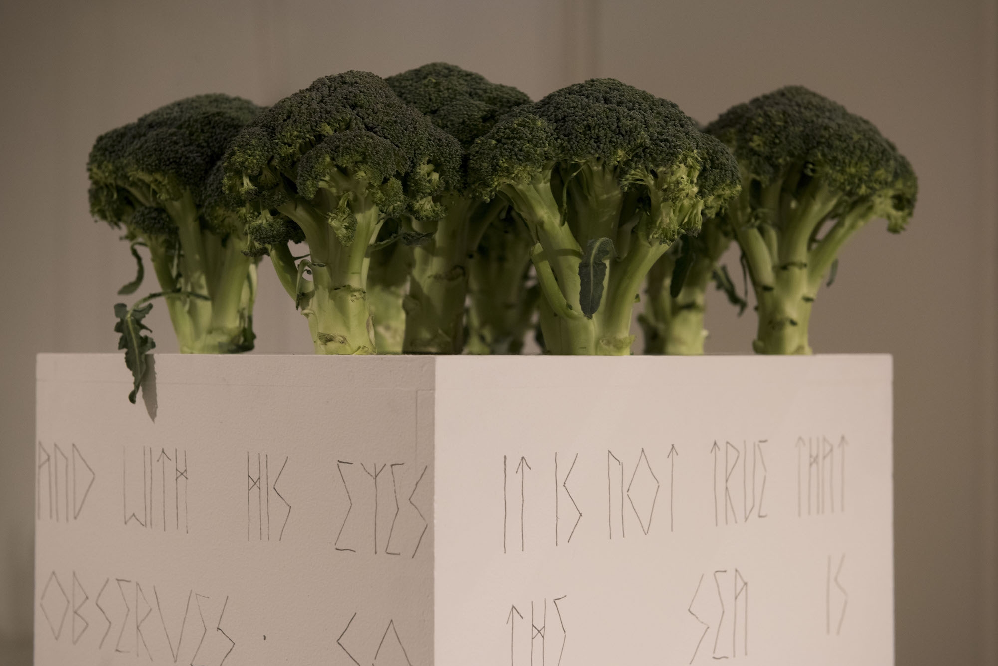 Storied Landscape  Artist Typeface on Plinth (Acrylic), Broccoli Dimensions and Text Variable 2017