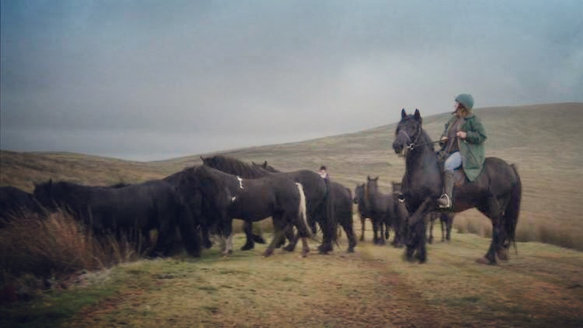 Gathering Wellbrow ponies