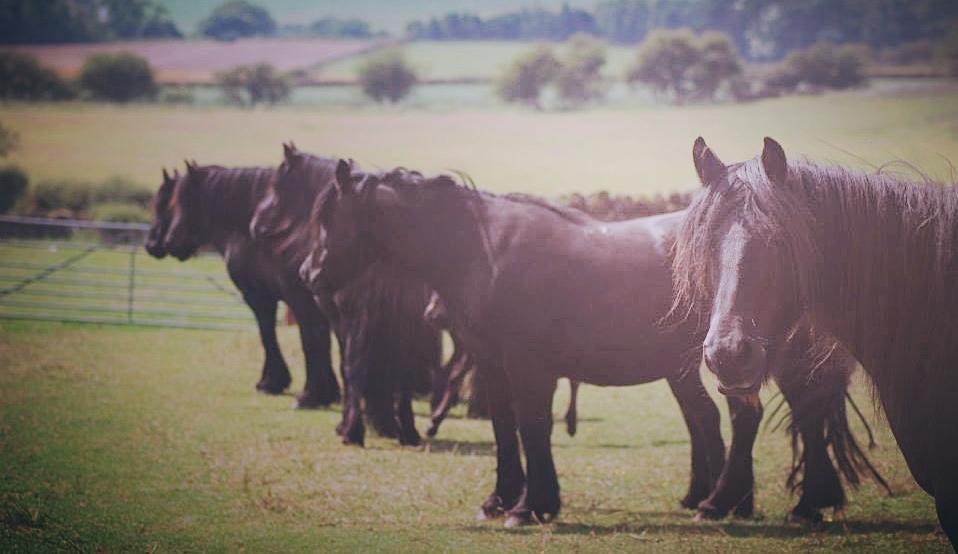 Lownthwaite mares