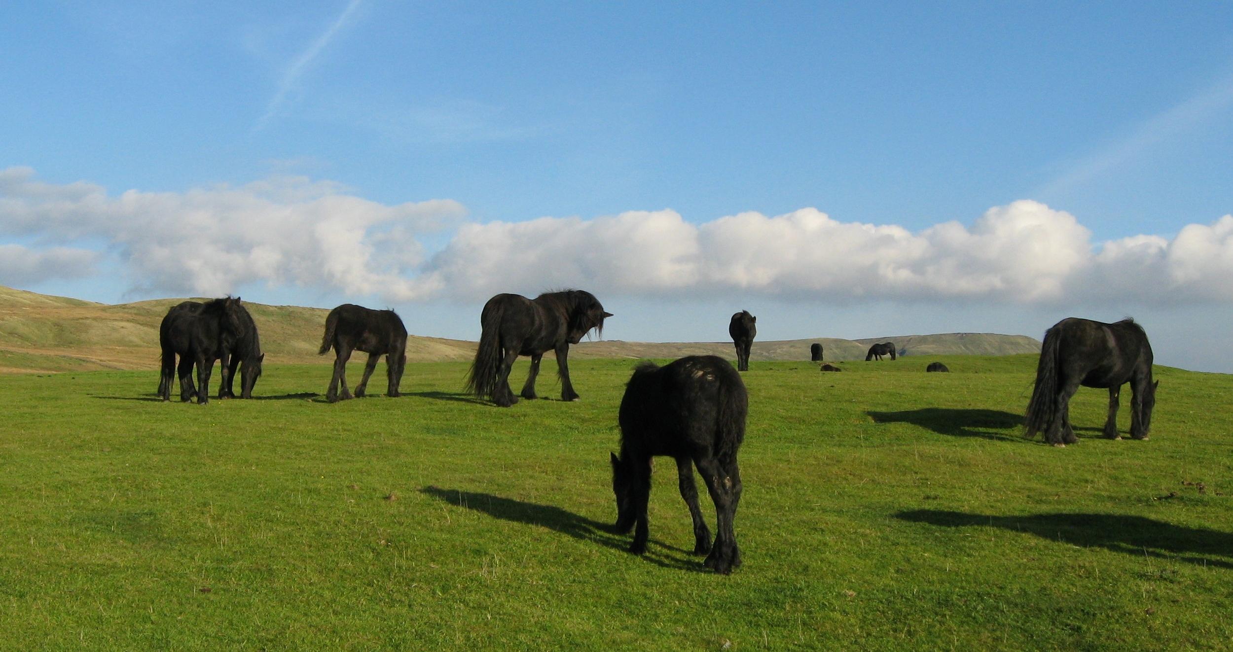Banksgate mares
