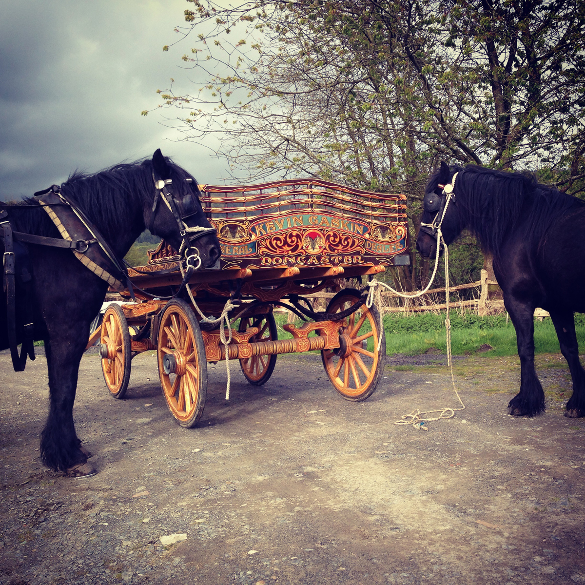 Hades Hill driving mares