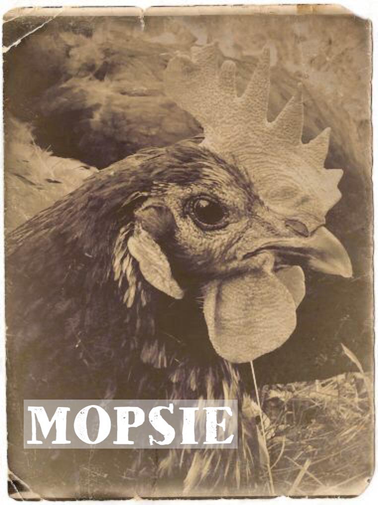 MOPSIE - Found wandering in Queens with Flopsie and Zoltan.