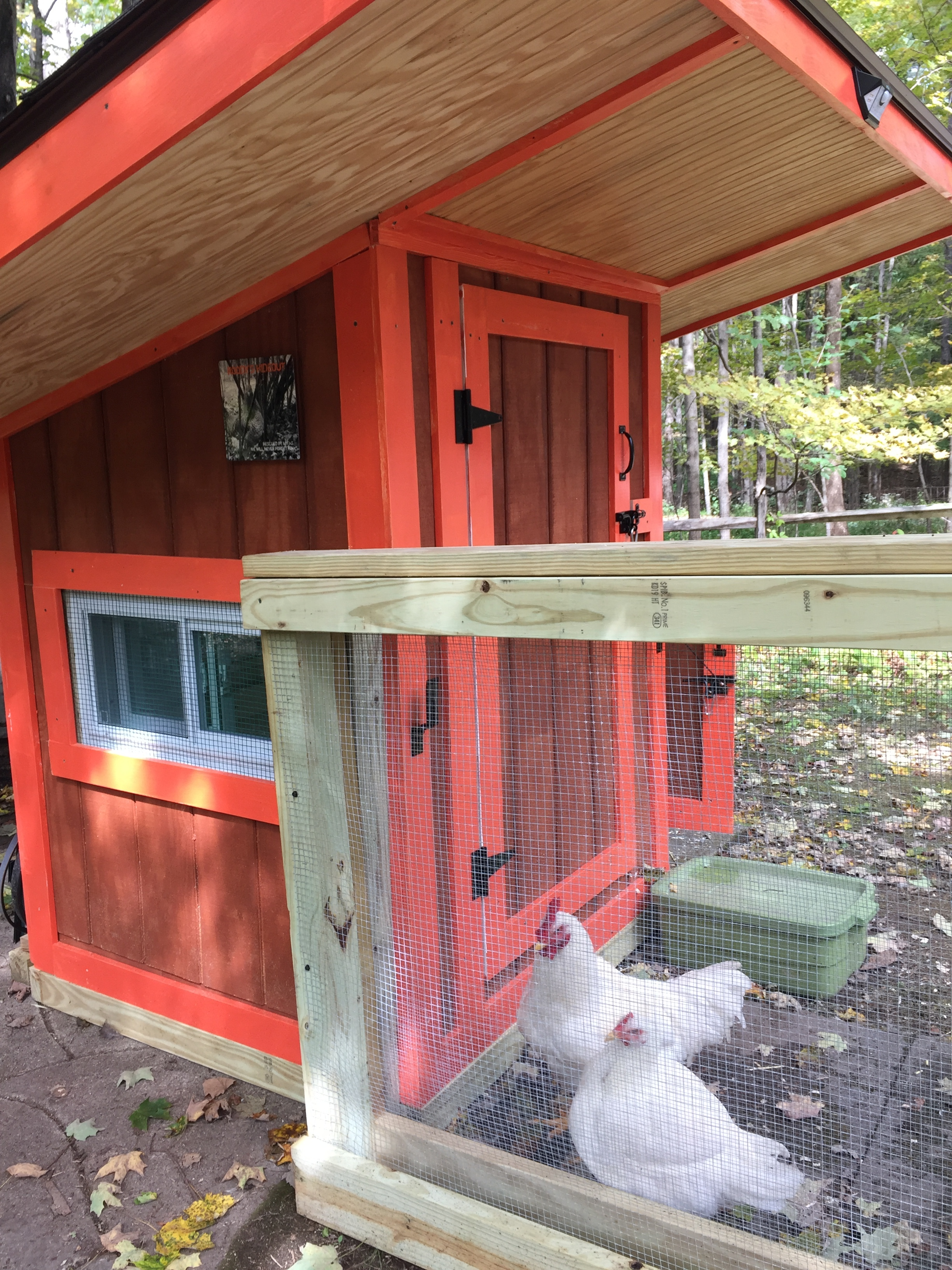 """Penguin & Chico move into Coop #3, now called """"Roody's Hideout"""" in honor of a truly special rooster."""