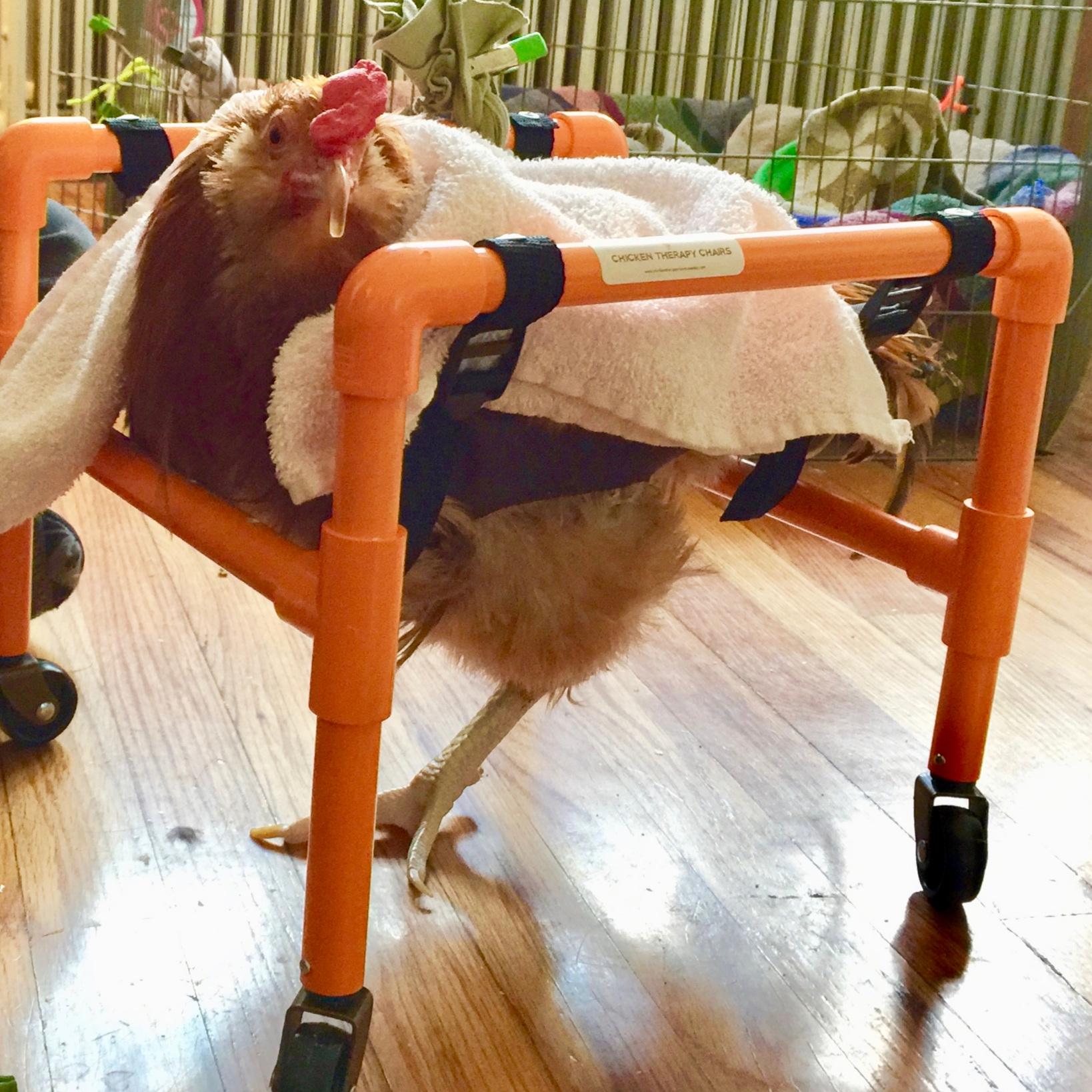 Avery+in+chair+by+Miriam.jpg