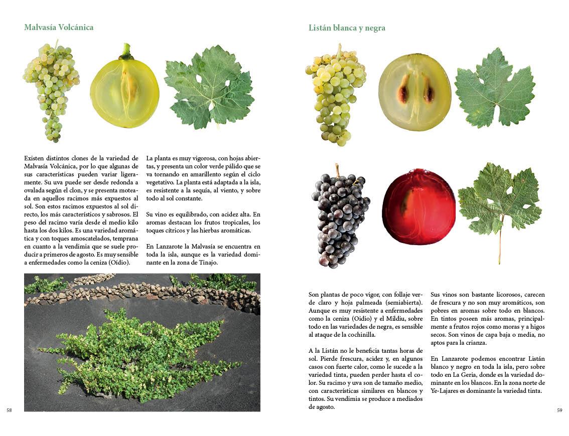 Lanzarote y el vino 05.jpg