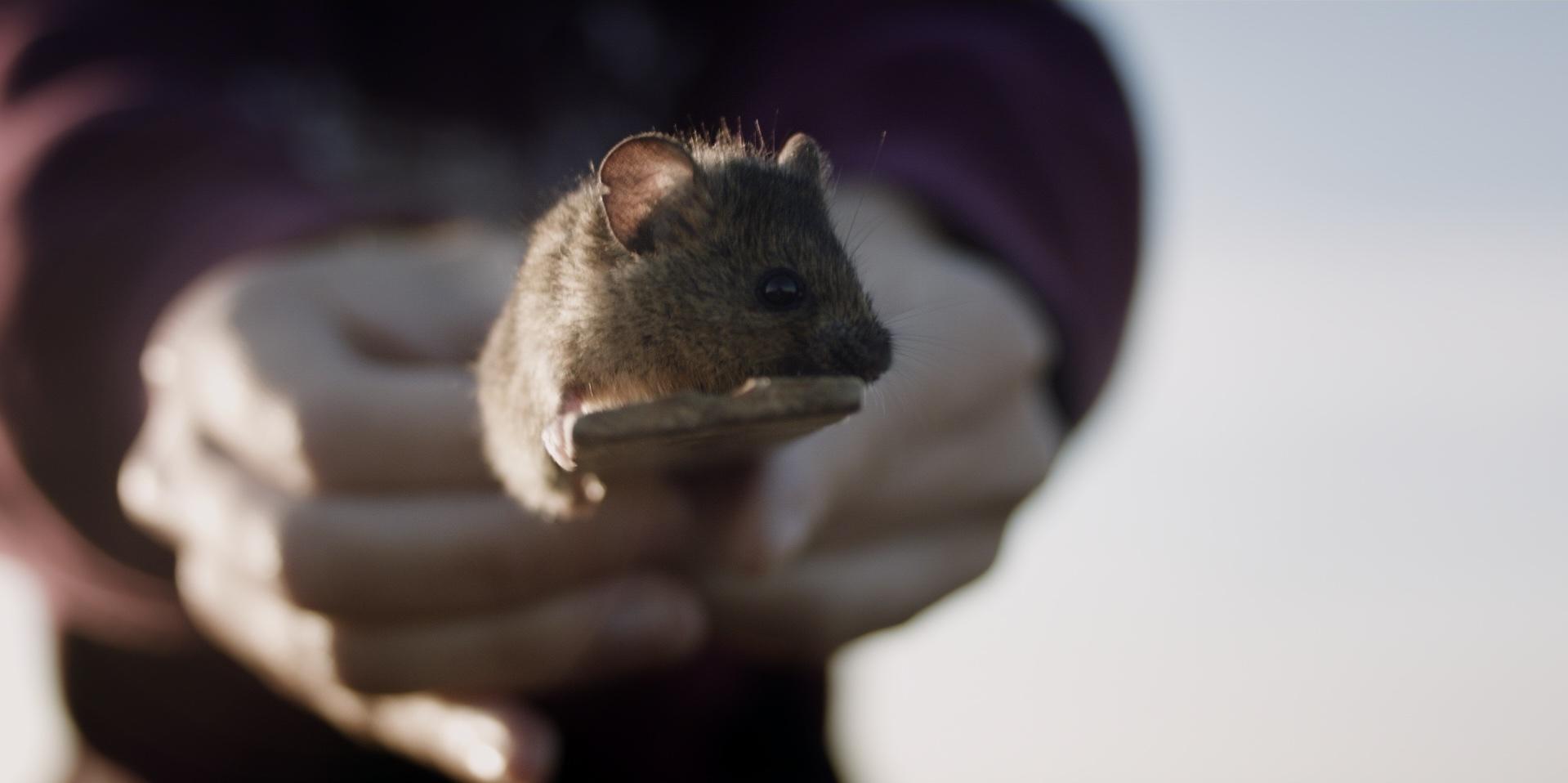 mice_1.57.3.jpg