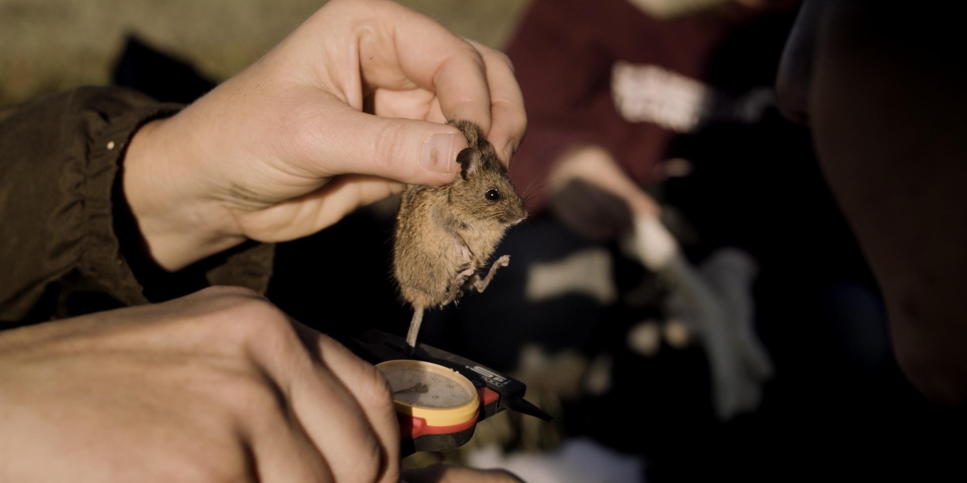 mice_1.171.1.jpg