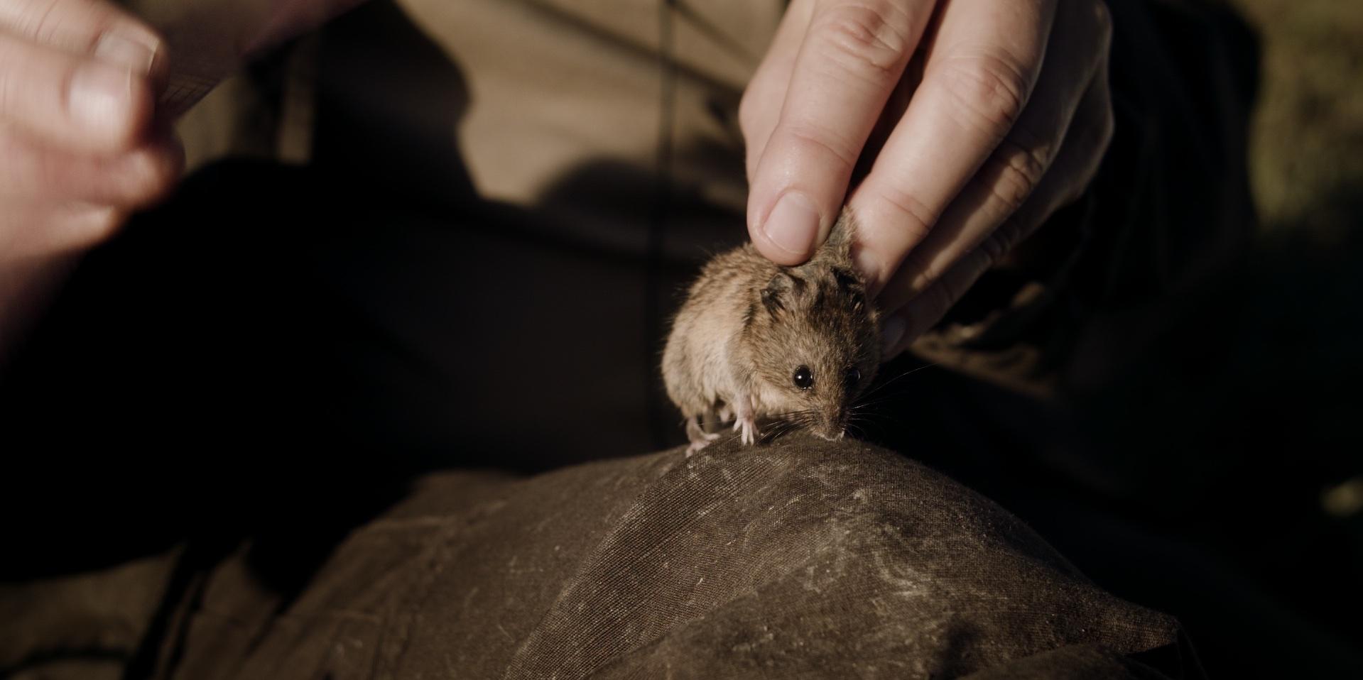 mice_1.177.1.jpg
