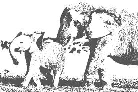 elephantnudge (1).jpeg