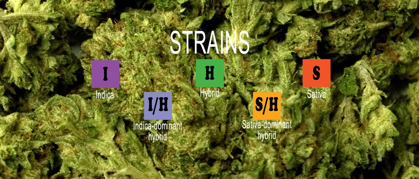 strains_slide.jpg