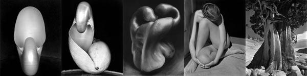 Edward Weston Photographs