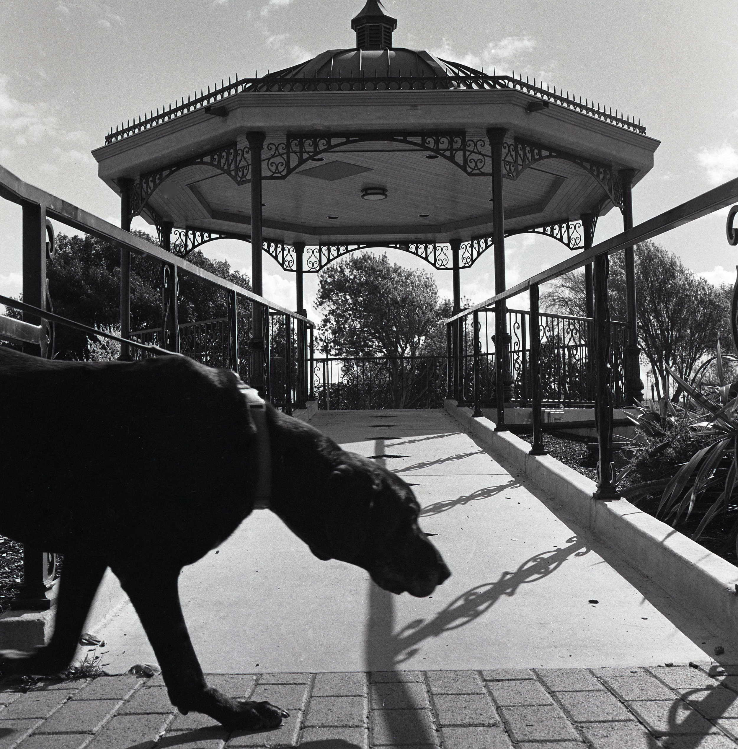 Perro y Kiosko,Salinas,CA, 2017.jpg