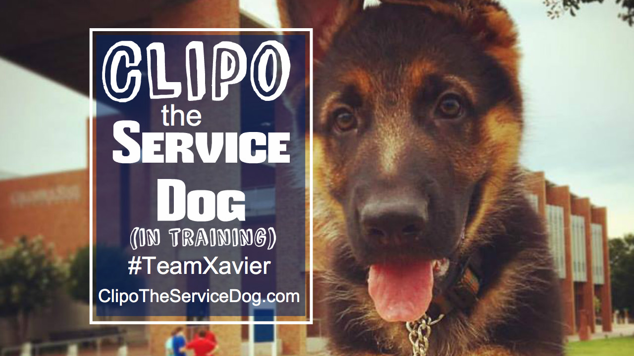 Click this image to visit ClipoTheServiceDog.com.