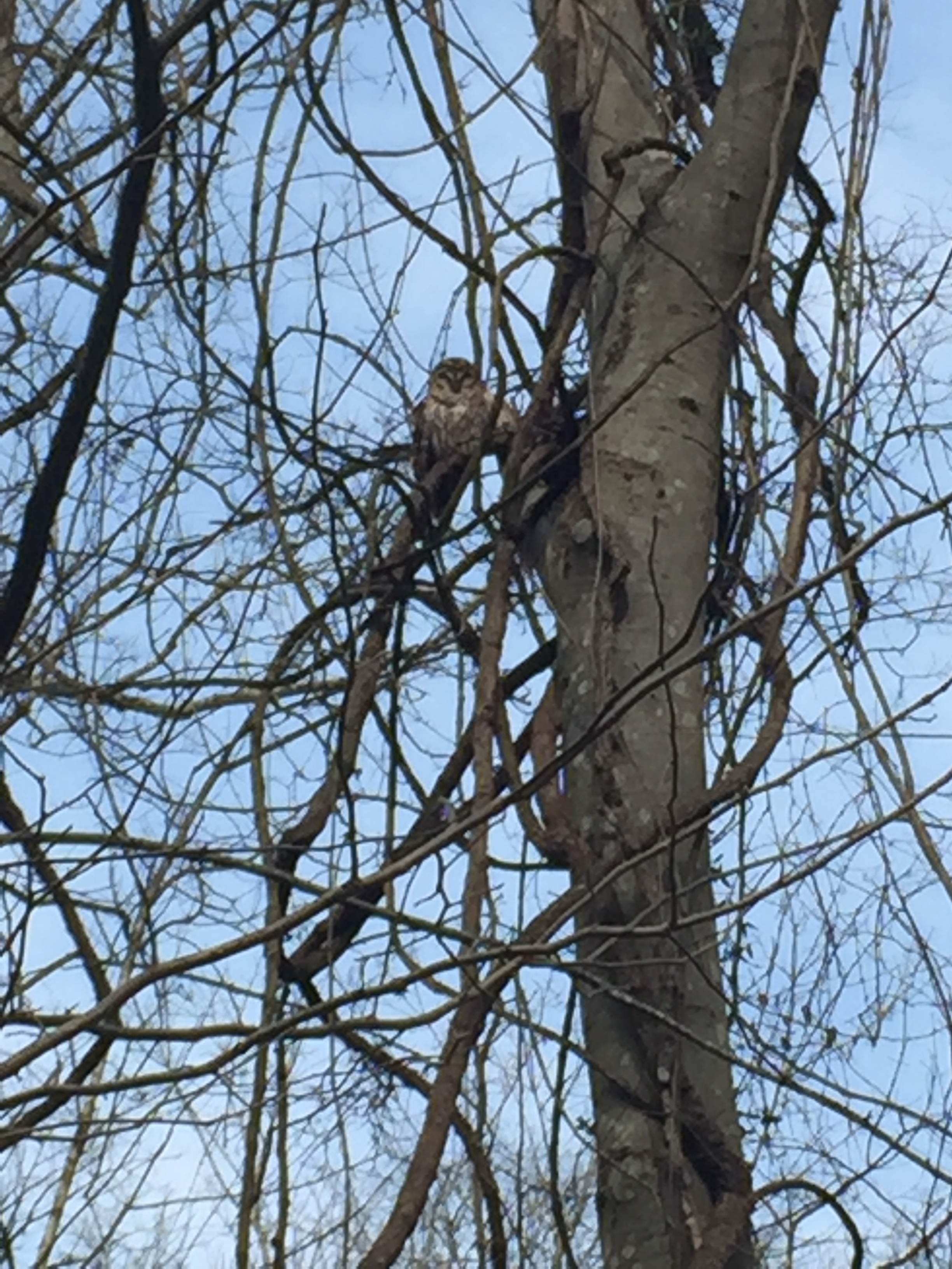 Owl spotting in a tree