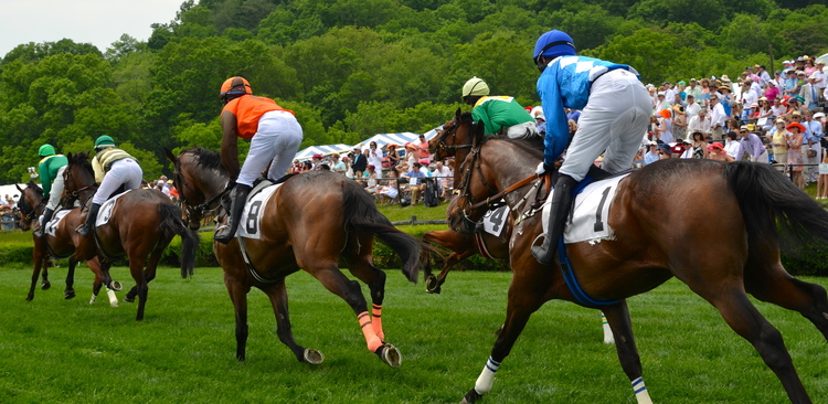 Source: @ Iroquois Steeplechase