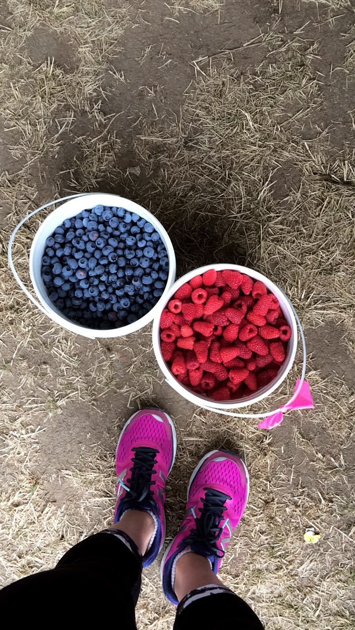 blueberry-raspberry-picking-vancouver