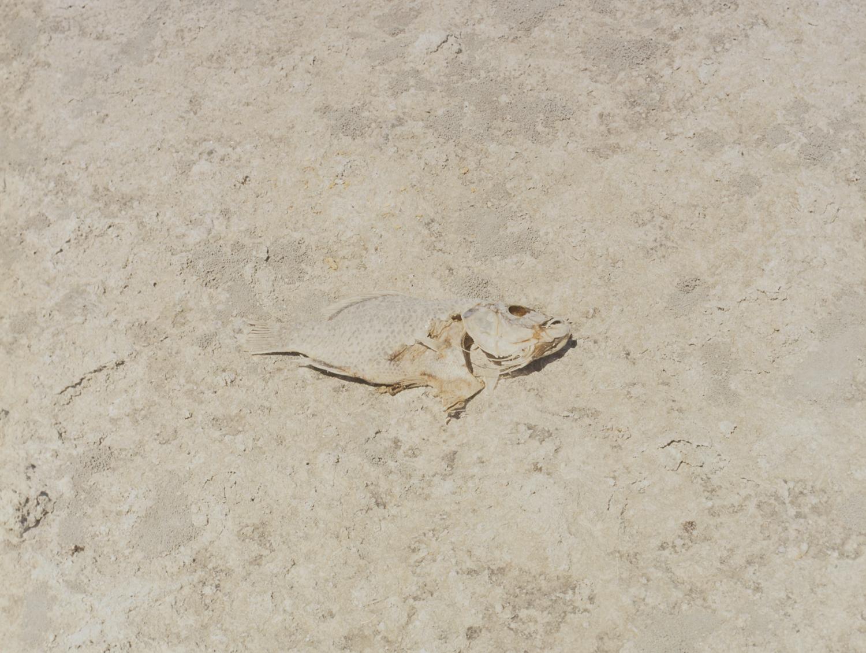 28 Aug 2016, Dead Fish, Bombay Beach, Salton Sea, CA. Pentax 645, Ektar 100 @ 400, Developed (Unicolor) and Scanned by me.