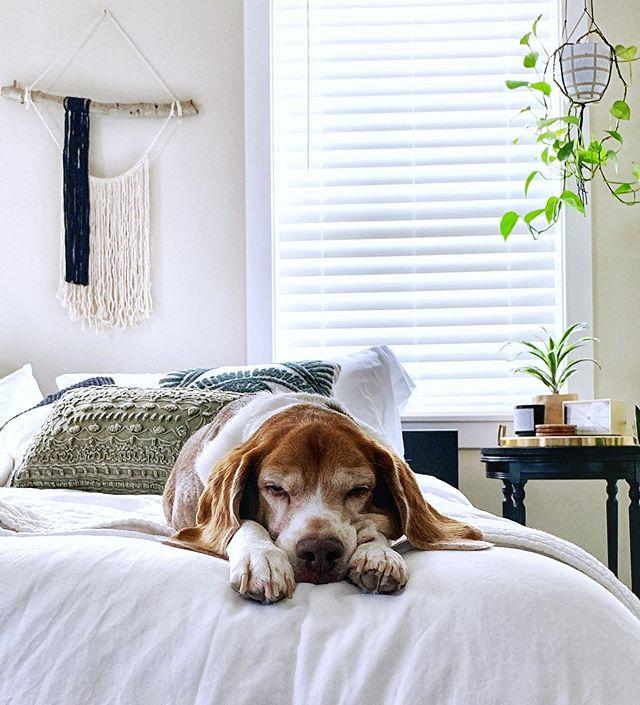 Sunday mood. 🐶💤 #acornerofmyhome #dogdad #happyhealthyhewie