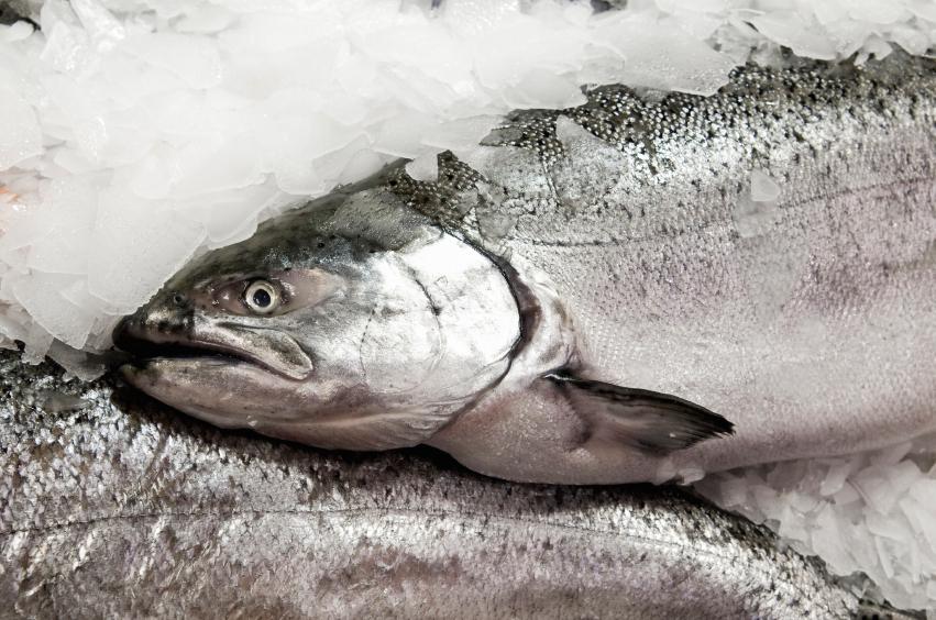 Line Caught Ocean Chinook Salmon.