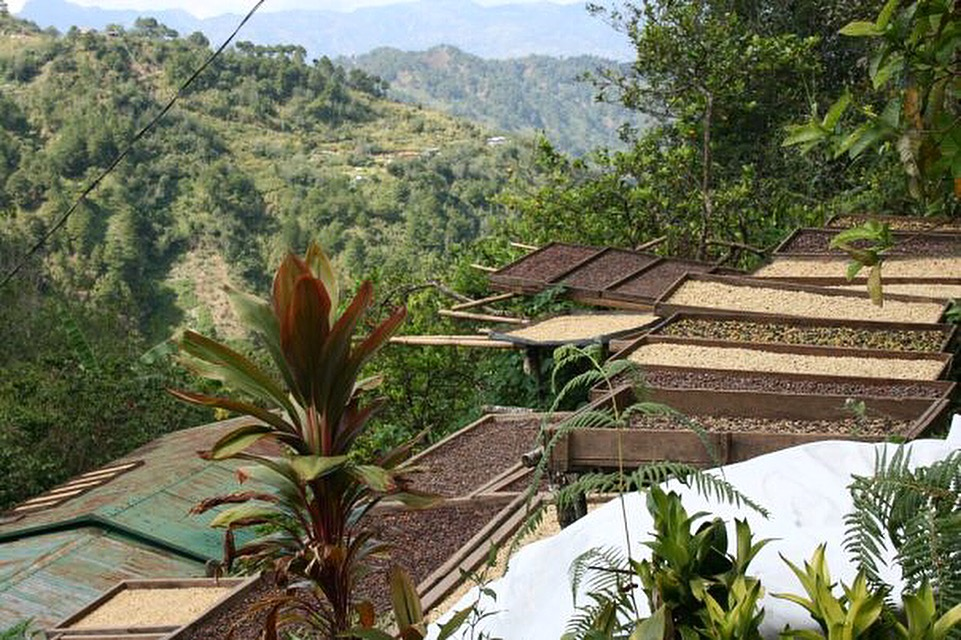 The Cordillera region in the Philippines has the ideal altitude and the climate for growing high quality coffee. Above is a photo of the Luisito family's drying patio.