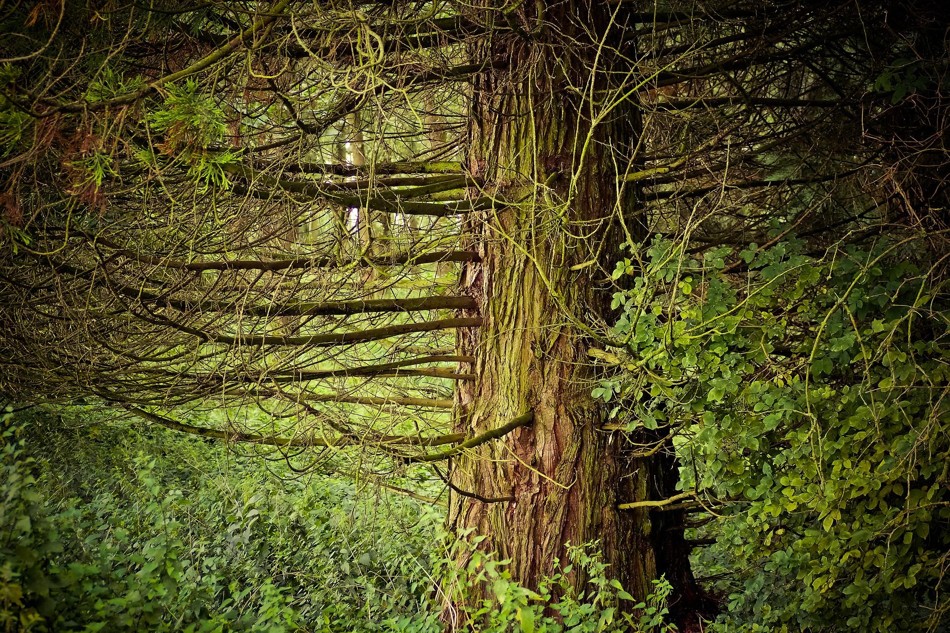forest-2672042_1920.jpg