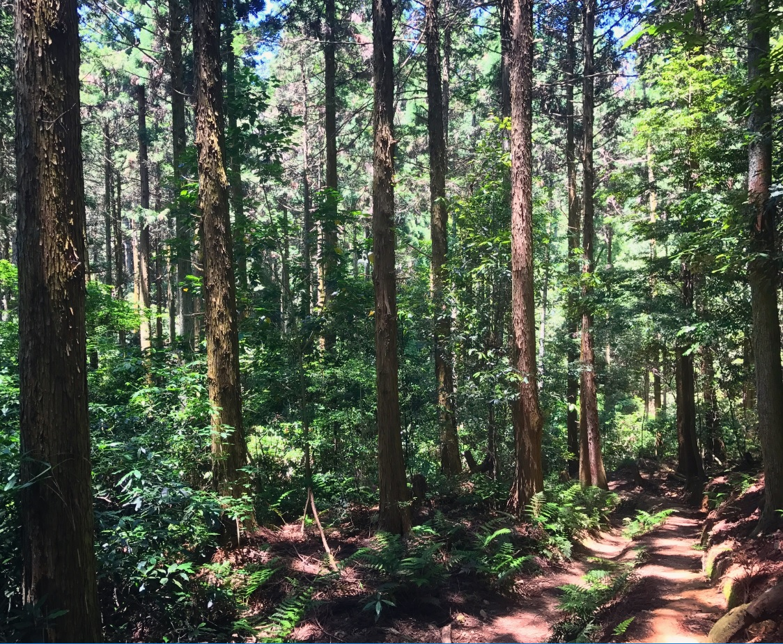 forest kyoto 2.jpg