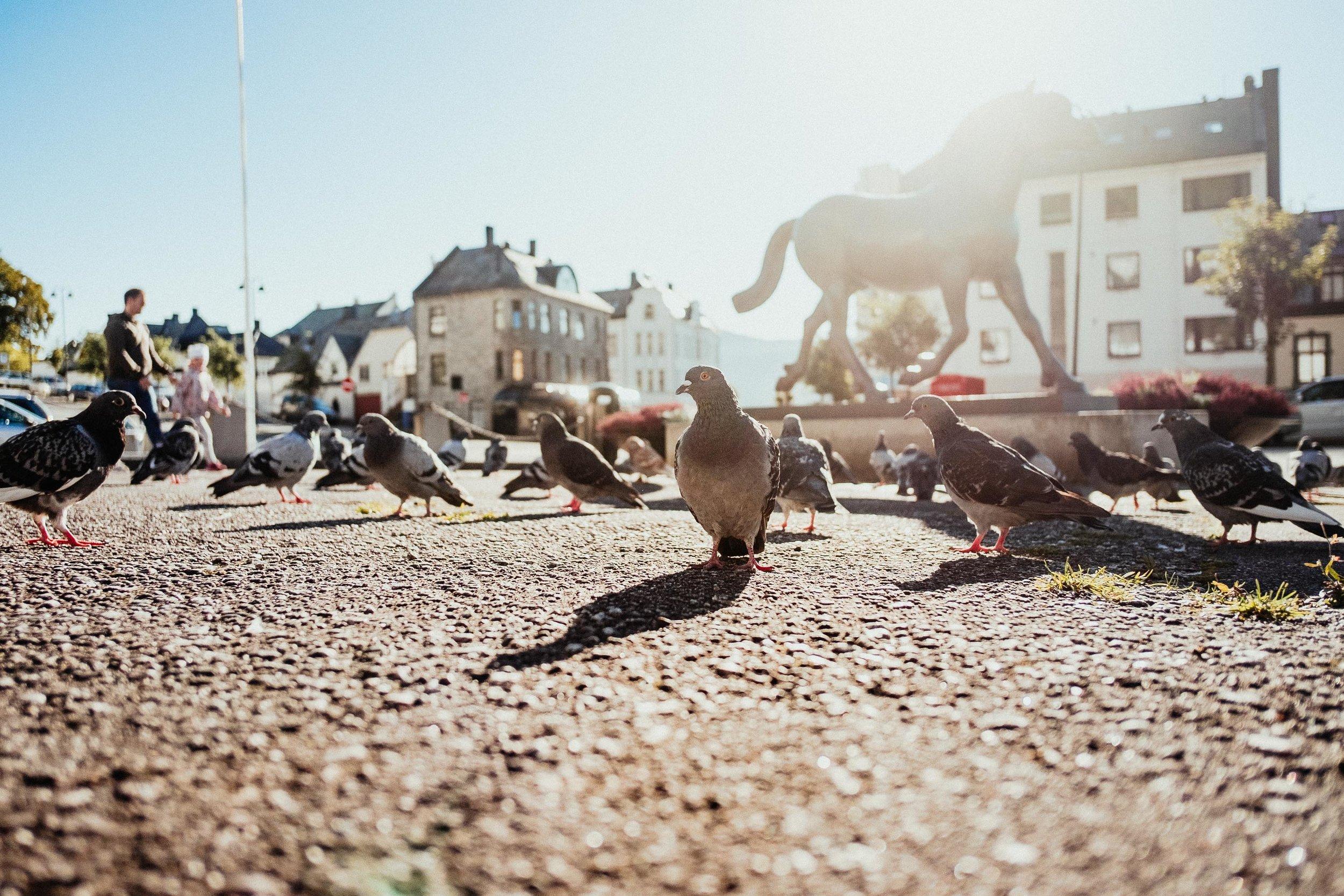 Norway_MaxHartmann-5443.jpg