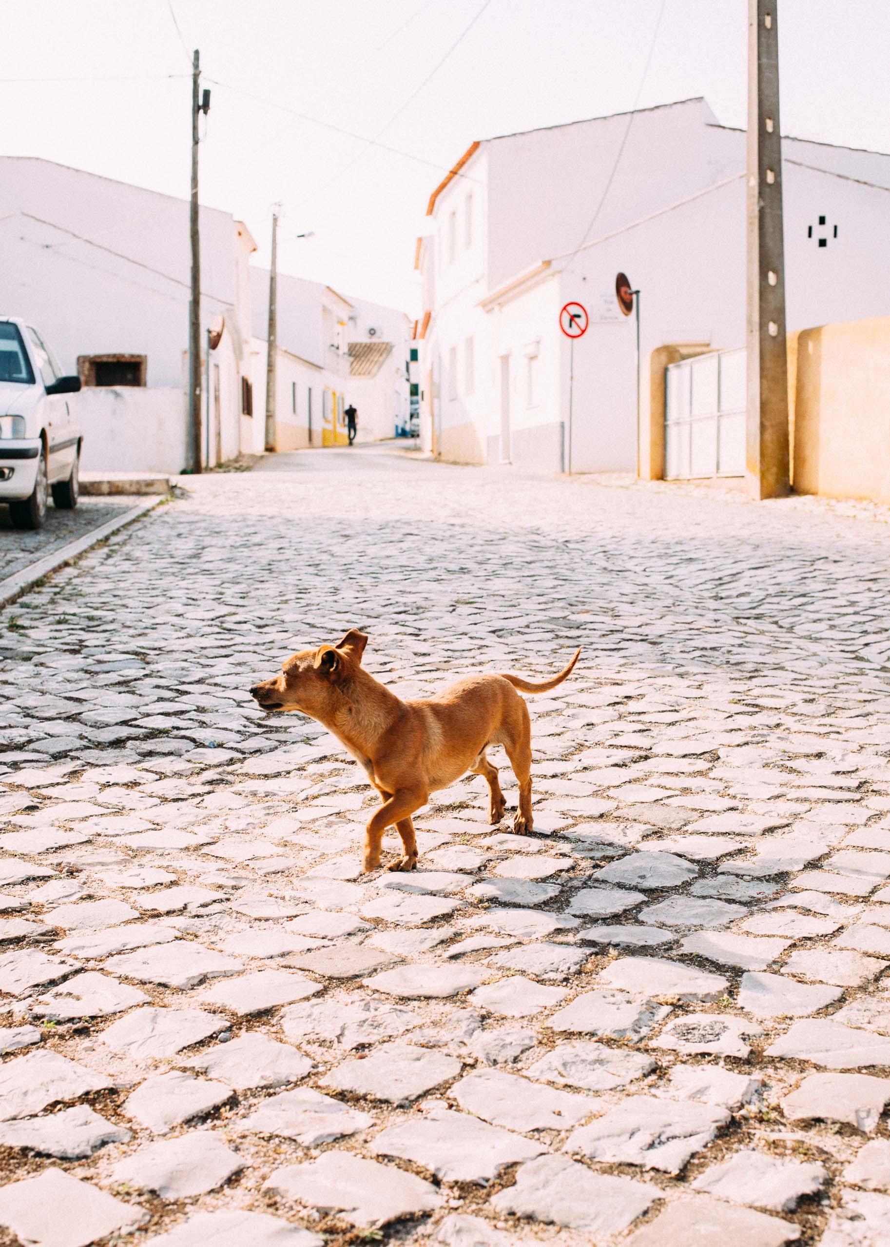 MaxHartmannphoto_Algarve2017-2247.jpg
