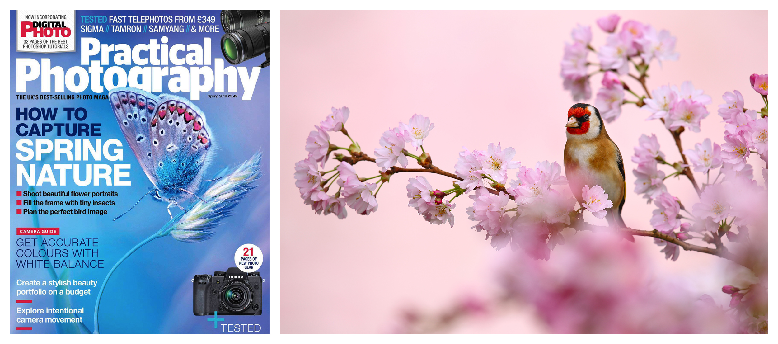 Simon Roy, Yorkshire, York, Wetherby, British, UK, wildlife photographer, RSPB, goldfinch, spring, practical, photogra