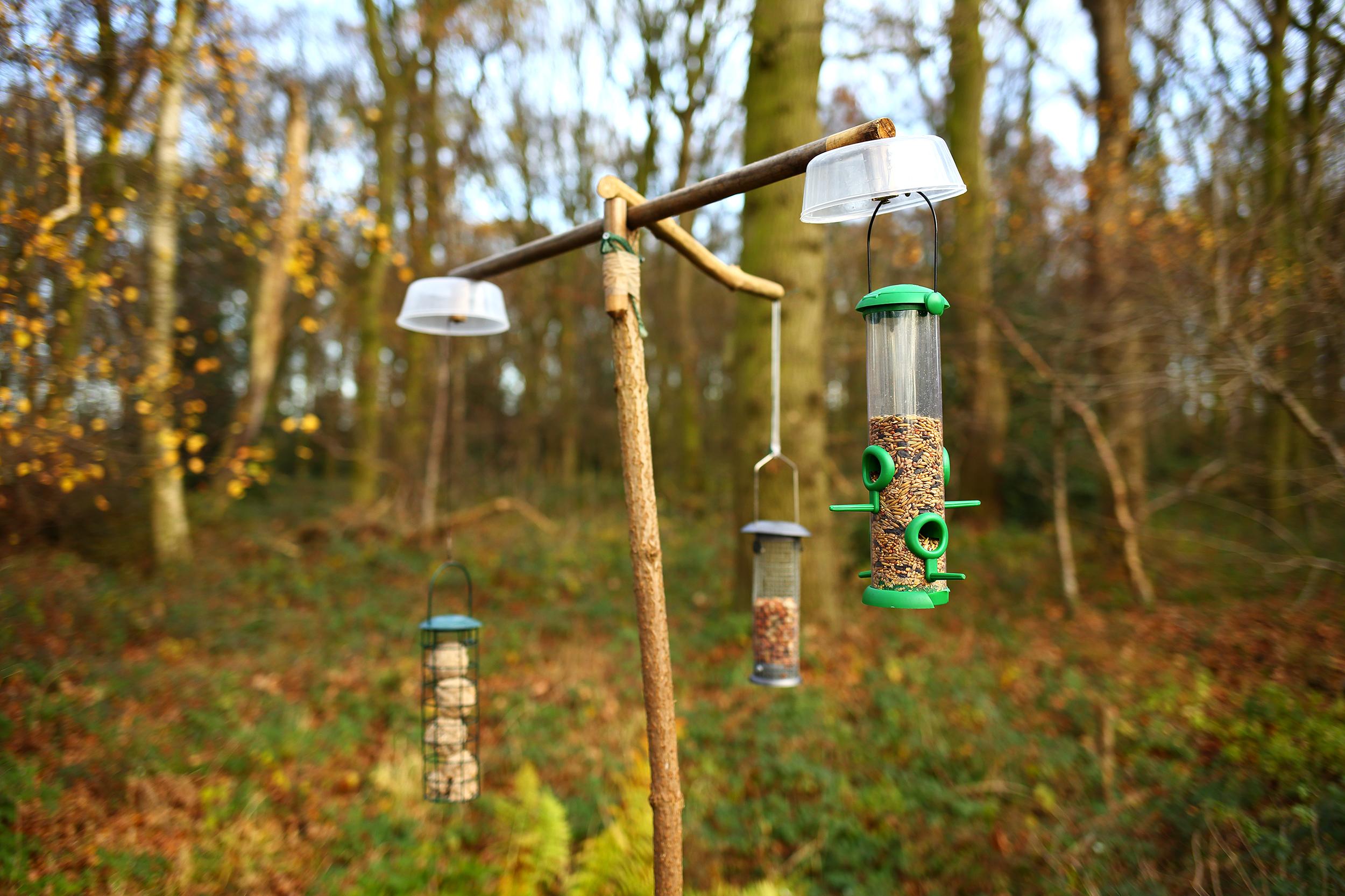 simon, roy, photography, yorkshire, wildlife, photographer, woodland, hide, feeders
