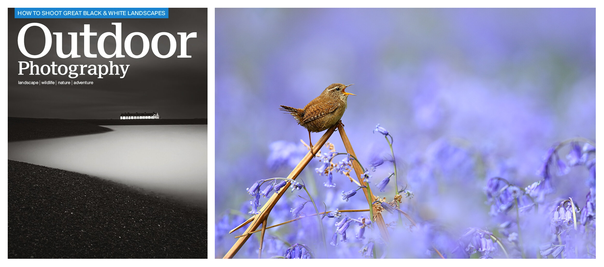 simon, roy, outdoor, photography, magazine, nature, wren