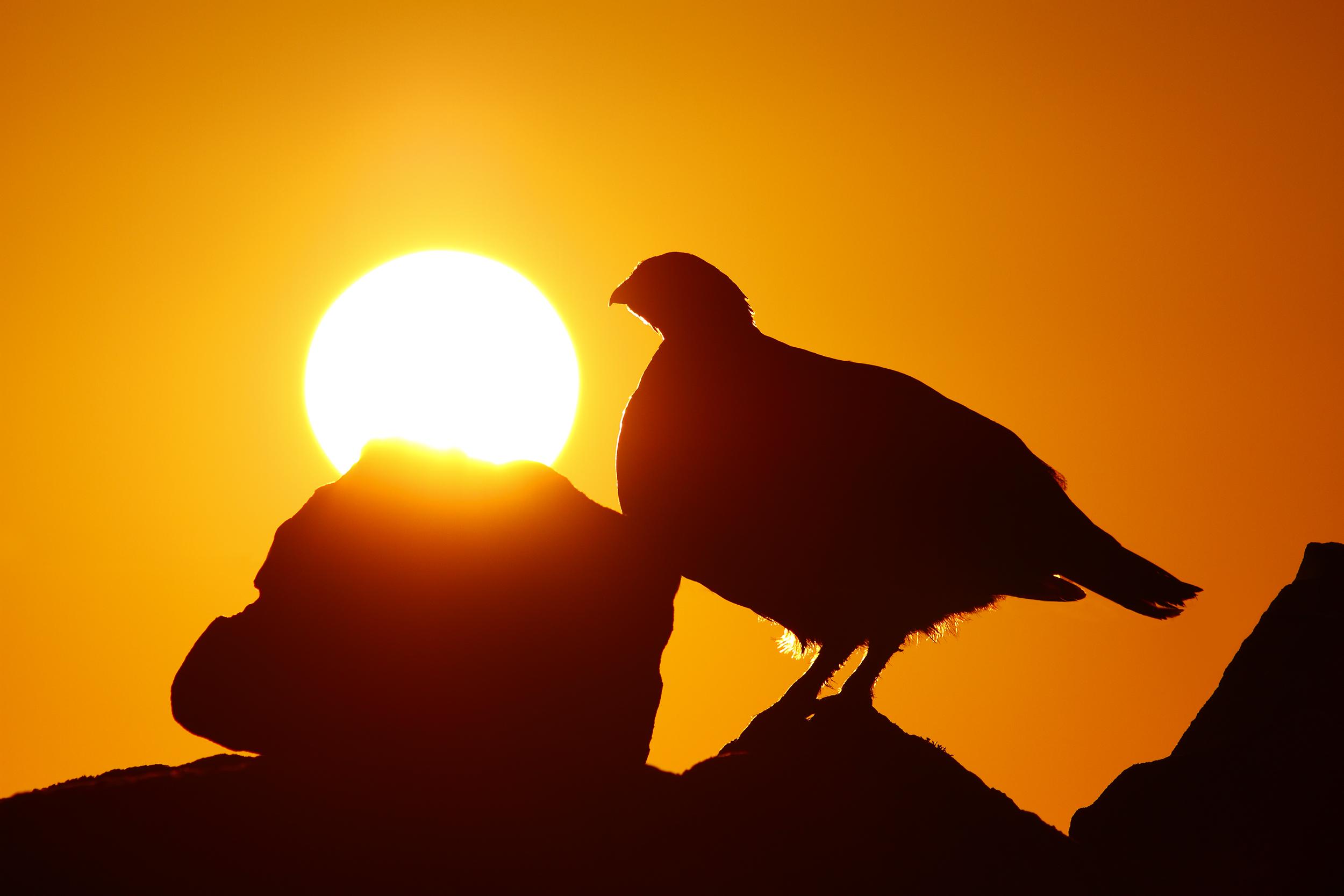 Sunrise_Grouse.jpg