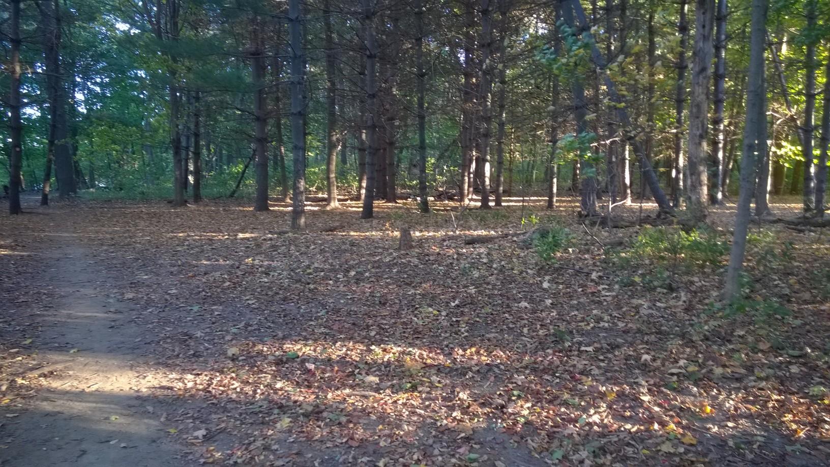 forest walk path.jpg