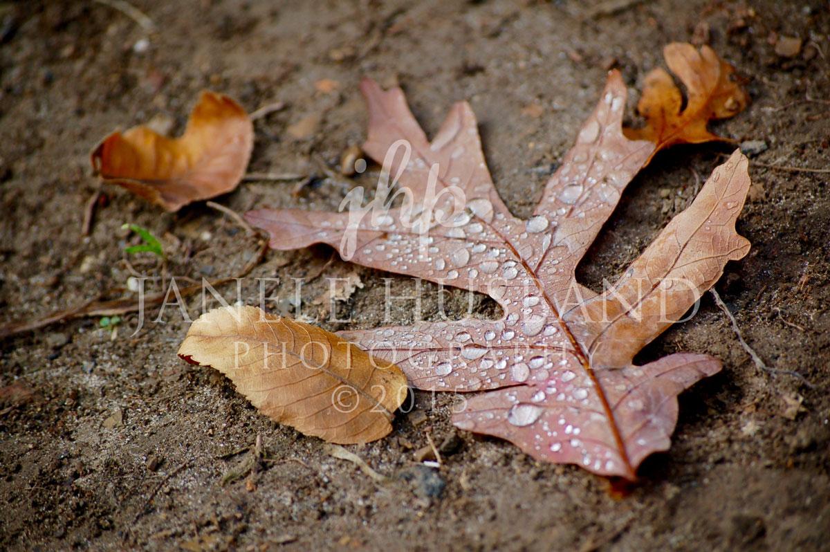 Oak-leaf-10.18.08-DSC_0038.jpg