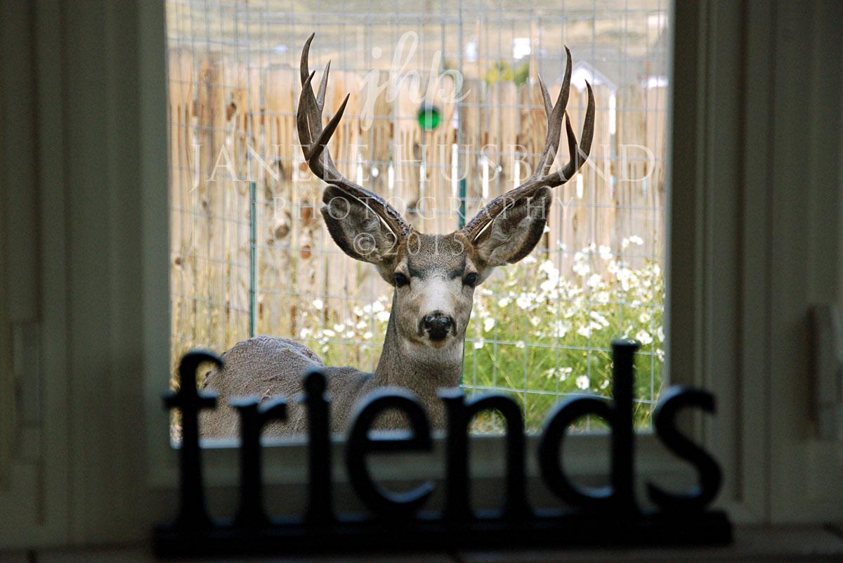 Deer-friends-DSC_0365.jpg