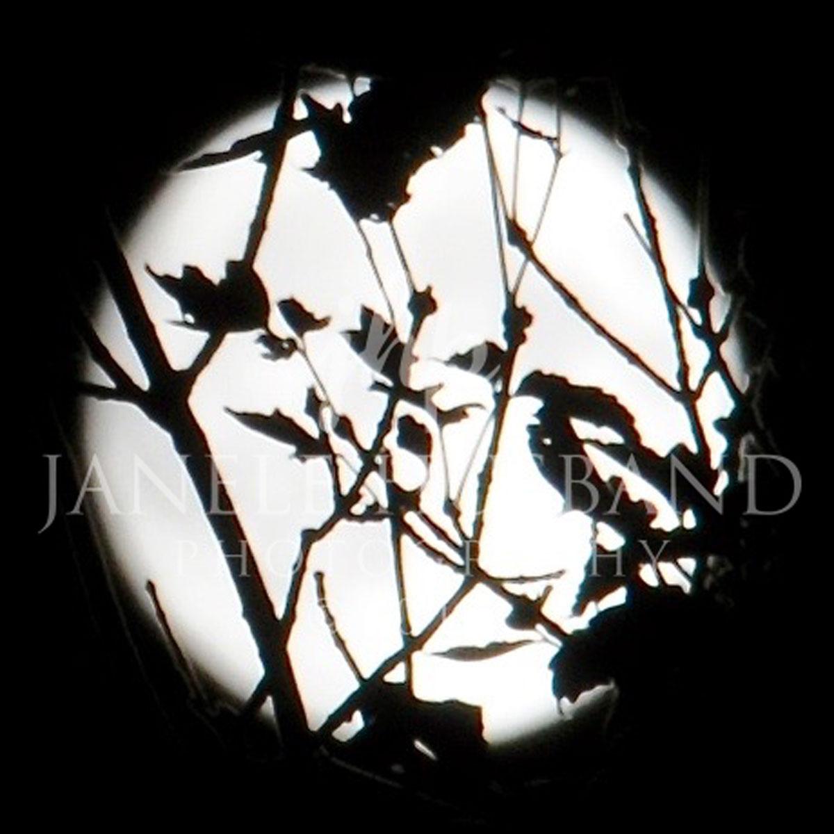 Moon-Tree-silhouette-DSC_8347.jpg