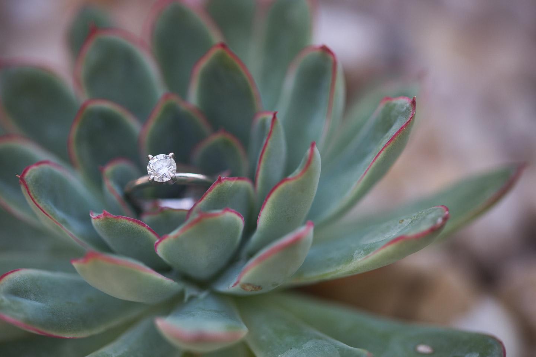 Michigan-Engagement-Photographer-Light-Garden-Photography-8.jpg