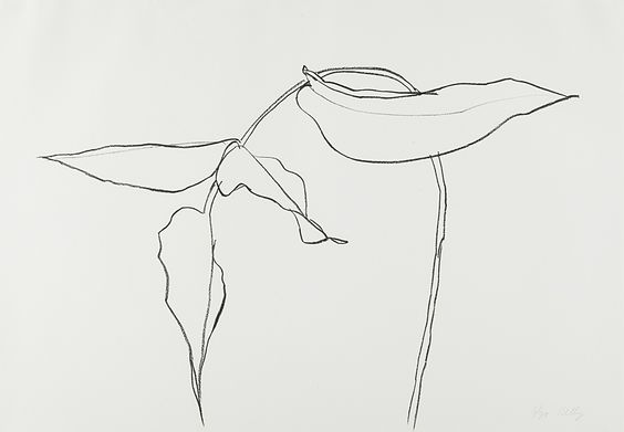 Ellsworth Kelly, Philodendron II, from Series of Plant and Flower, 1983-85