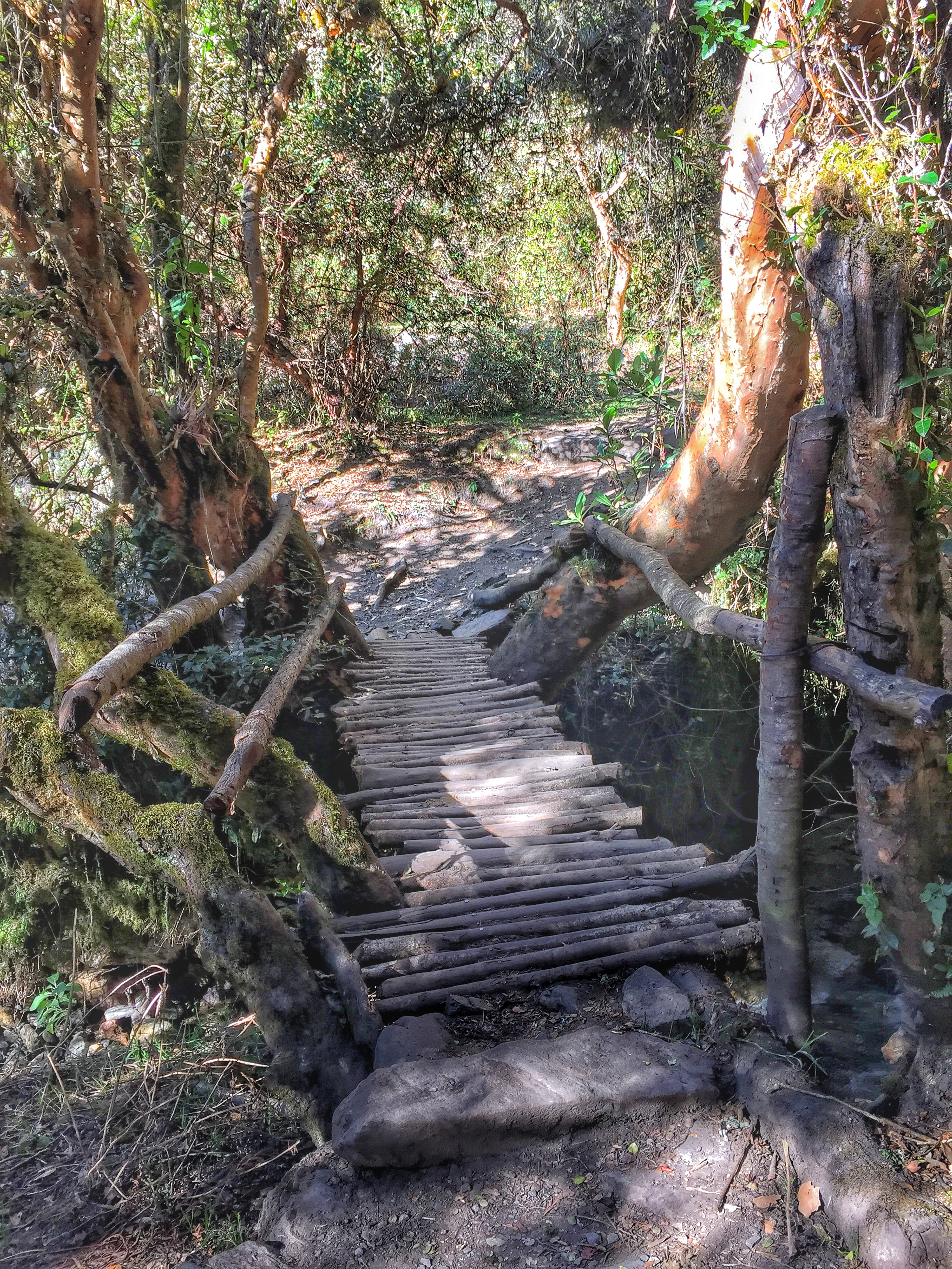 One of the many bridges we had to cross on the trail.